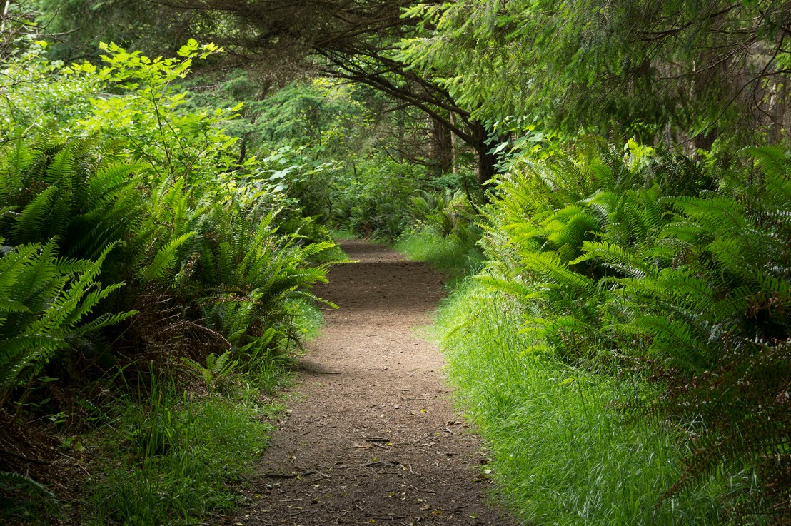 Cape Arago Trails
