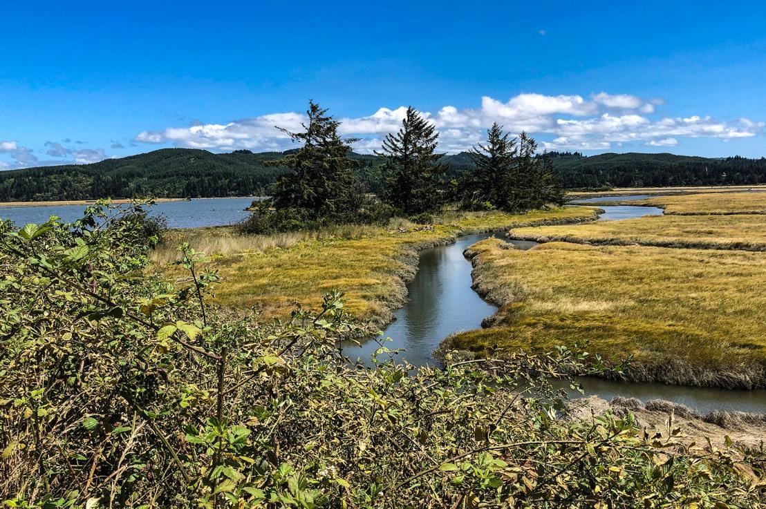 Millacoma Marsh